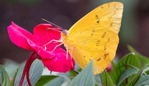 See hundreds of live butterflies