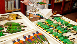 Museum bird collection