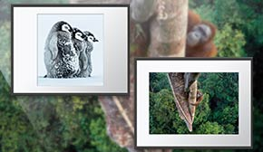 Wildlife Photographer of the Year wall prints