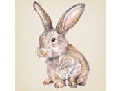 Wildlife Drawing: Easter Bunnies © Jennie Webber